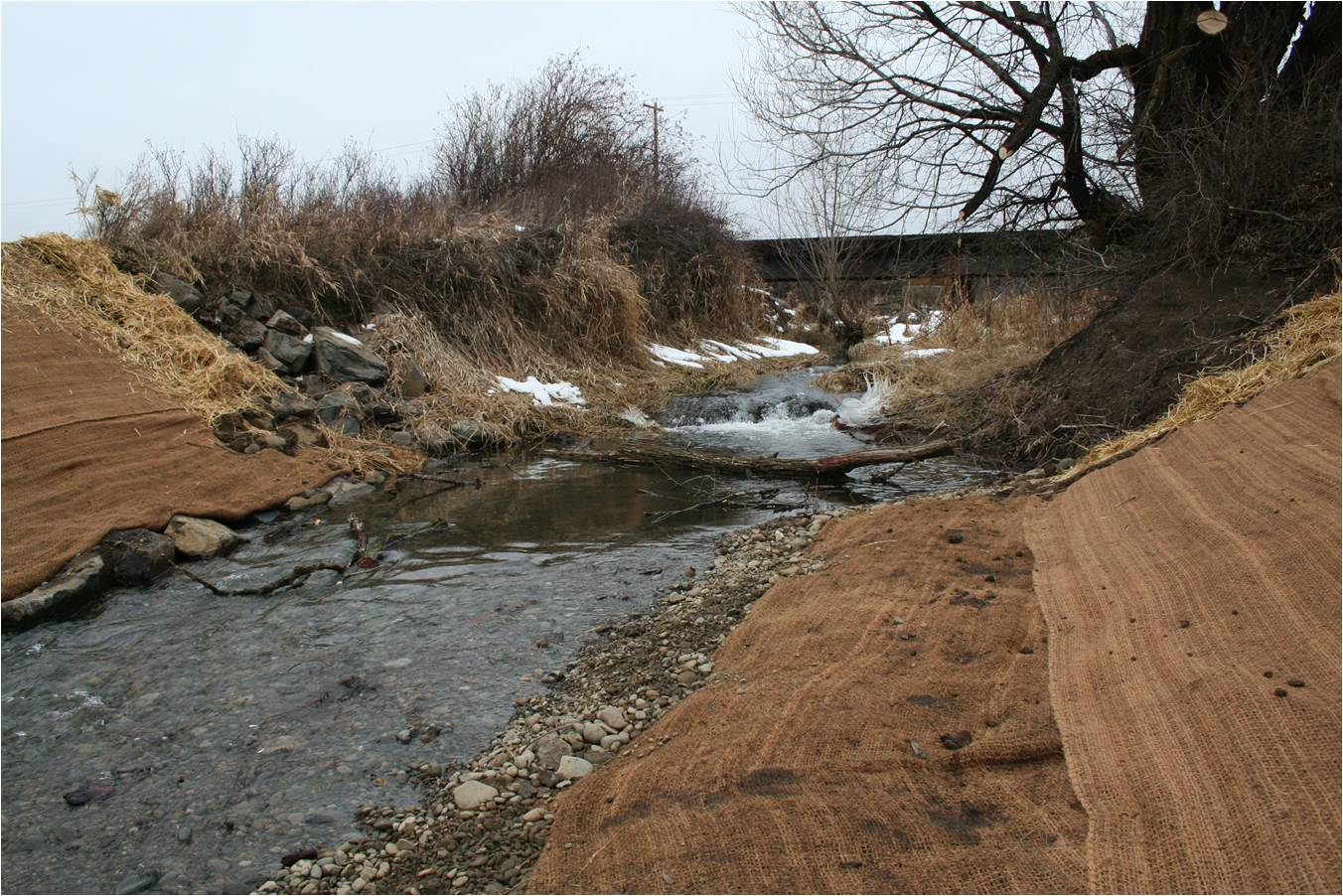 Currier/Reecer Creek Barrier Removal and Revegetation Project
