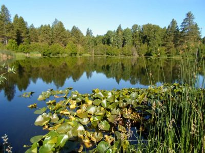 WSDOT gravel pond wetland complex