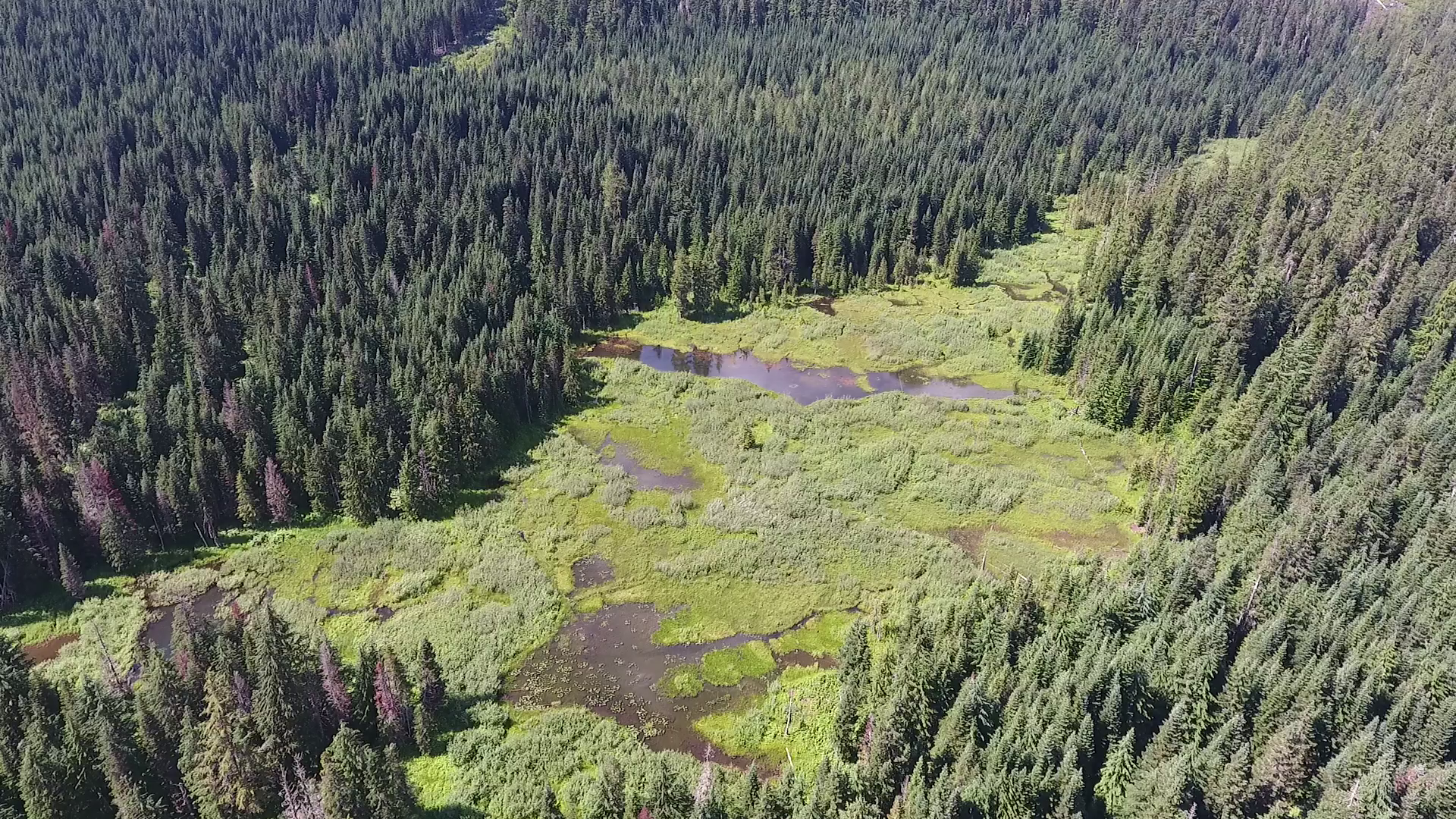 A wetland complex located in Gold Creek Valley.